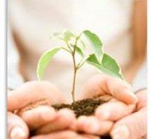 両手の土に生える新芽